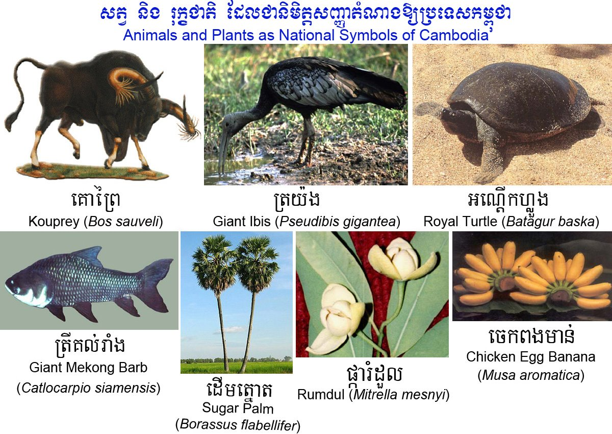 Animals and plants as national symbols of cambodia chanroeun buycottarizona Choice Image